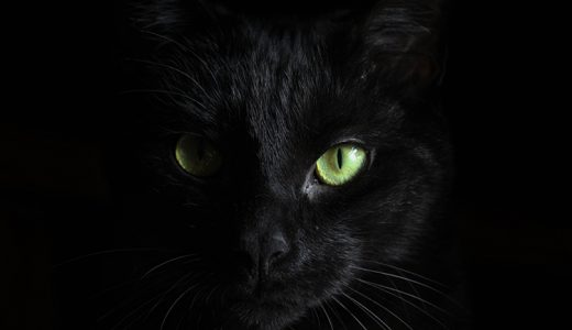 黒猫は実は縁起の良い猫?不吉な迷信だけではない理由