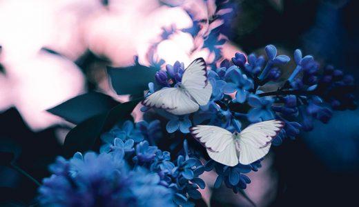 見た目も美しい「蝶」の縁起物としての意味とは?
